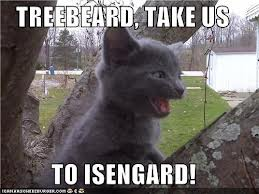Treebeard Cat