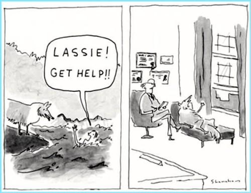 Lassie Get Help