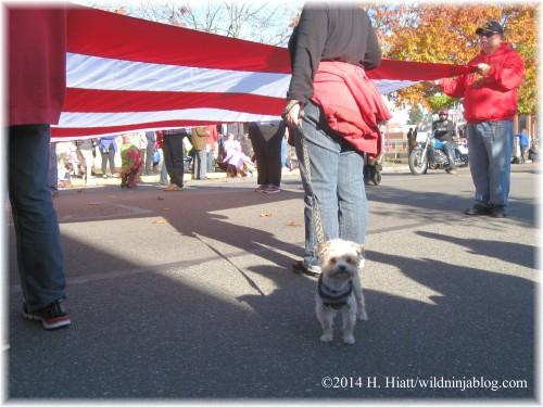 Auburn Veterans Day Parade 2014 23