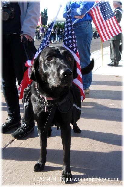 Auburn Veterans Day Parade 2014 3